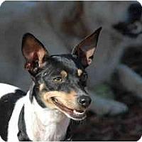 Adopt A Pet :: Trixy - Ft. Myers, FL