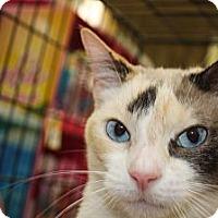 Adopt A Pet :: Sweetie - Vero Beach, FL