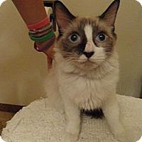 Adopt A Pet :: Celeste - Phoenix, AZ