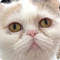 Adopt A Pet :: Buttons - Beverly Hills, CA