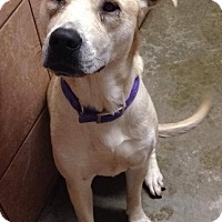 Adopt A Pet :: River-Foster Needed - North Olmsted, OH