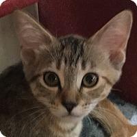 Adopt A Pet :: Carly - Winchester, CA