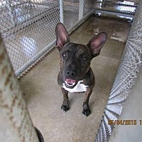 Adopt A Pet :: Amy - Lake Placid, FL