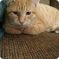Adopt A Pet :: Tara - Levelland, TX