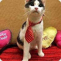 Adopt A Pet :: Bubbles - Mebane, NC