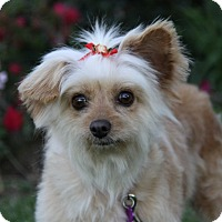 Adopt A Pet :: CALLISTA - Newport Beach, CA