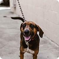 Adopt A Pet :: Gloria - Chino Hills - Chino Hills, CA