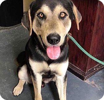Shepherd (Unknown Type) Mix Puppy for adoption in Toronto, Ontario - KEANU
