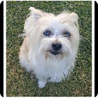 Adopt A Pet :: MONKEY MAN - Winchester, CA