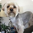 Adopt A Pet :: Griff