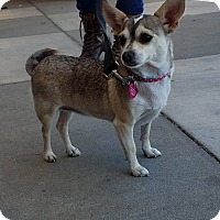 Adopt A Pet :: Mandy - Fountain Valley, CA