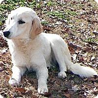 Adopt A Pet :: Kate - New Canaan, CT