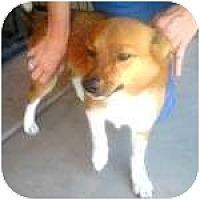 Adopt A Pet :: RANDALL - Gilbert, AZ