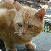 Adopt A Pet :: Little Orange - Cincinnati, OH
