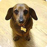 Adopt A Pet :: Amy - San Jose, CA