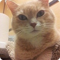 Adopt A Pet :: Miss Kitty - West Dundee, IL