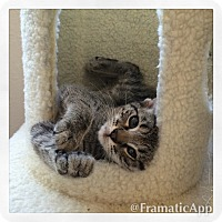Adopt A Pet :: Lola & Bella - Pasadena, CA