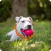 Adopt A Pet :: Custer - Portland, OR