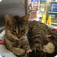 Adopt A Pet :: Hazel - Byron Center, MI