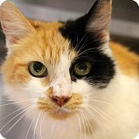 Adopt A Pet :: Bonanza - Sarasota, FL