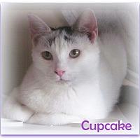 Adopt A Pet :: Cupcake - Culpeper, VA