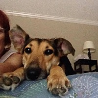 German Shepherd Dog Mix Dog for adoption in Jasper, Georgia - Sheba