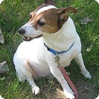 Adopt A Pet :: Tootsie - Gary, IN