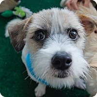 Adopt A Pet :: Mac - Fullerton, CA