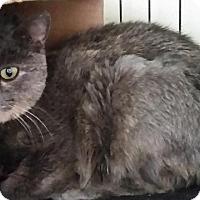 Adopt A Pet :: Darling Girl - Windsor, CT