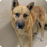 Adopt A Pet :: A20 Mel - Odessa, TX