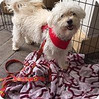 Adopt A Pet :: Minnie - El Segundo, CA