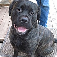 Adopt A Pet :: Tyra - Roy, WA