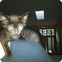 Adopt A Pet :: Garland - Sterling Hgts, MI