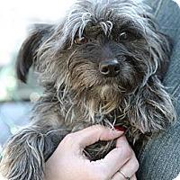 Adopt A Pet :: Dancer - Rockaway, NJ