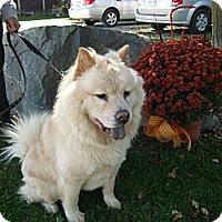 Adopt A Pet :: Shiloh - Tillsonburg, ON