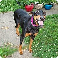 Adopt A Pet :: Ginger - New Richmond, OH