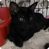 Adopt A Pet :: Marti - Morgan Hill, CA