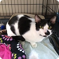 Adopt A Pet :: Spotty - Byron Center, MI