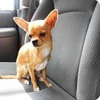Adopt A Pet :: Stanley - Shawnee Mission, KS