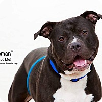 Adopt A Pet :: Roman - Wichita, KS
