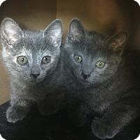 Adopt A Pet :: Sid and Nancy - Sherman Oaks, CA