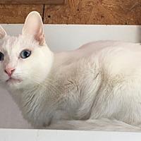 Adopt A Pet :: Quincy - Gilbert, AZ