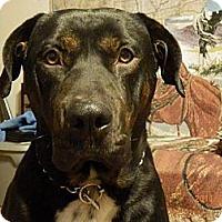Adopt A Pet :: General - Chewelah, WA