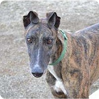 Adopt A Pet :: Beau (Whistlin Beau) - Chagrin Falls, OH