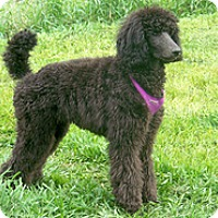 Adopt A Pet :: Mike - Wilmington, MA