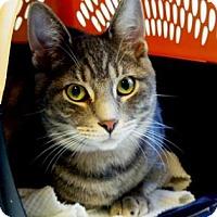 Adopt A Pet :: Peter - Belleville, MI