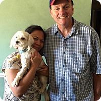 Adopt A Pet :: Abby - Sacramento, CA