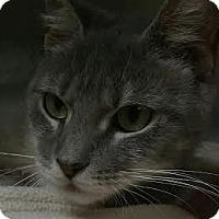 Adopt A Pet :: Susan Boyle - Richboro, PA