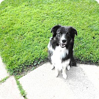 Adopt A Pet :: Doc - Midwest (WI, IL, MN), WI