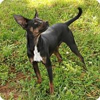 Adopt A Pet :: Radar - Salem, NH